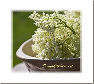 Elderflower picked